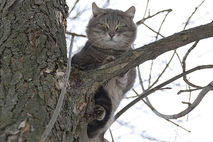 Из-за потепления в столицеРФ  резко возросла  статистика падений котов сбалконов