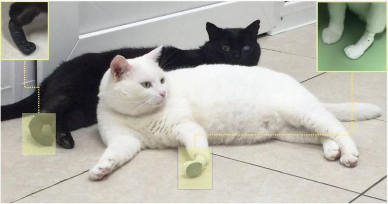 Томские ученые «поставили налапы» 3-х котов-инвалидов