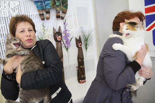 Картинки по запросу музей кота минск