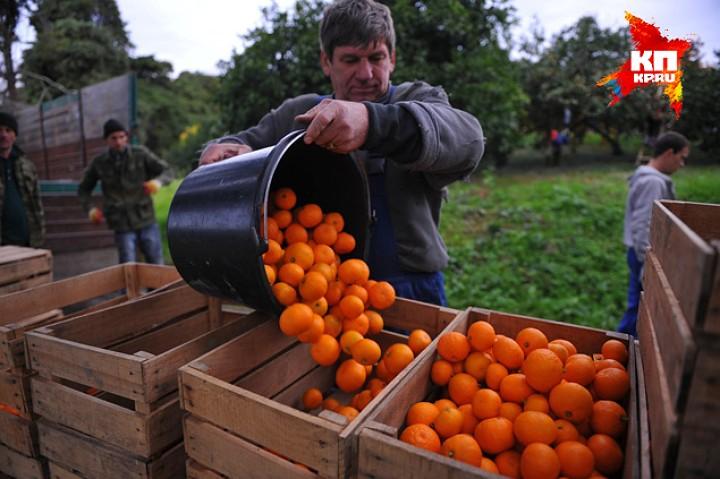 Основной урожай задешево у крестьян по селам берут перекупщики. Они вынуждены делиться со всякими там структурами. Такова традиция Фото: Виктор ГУСЕЙНОВ