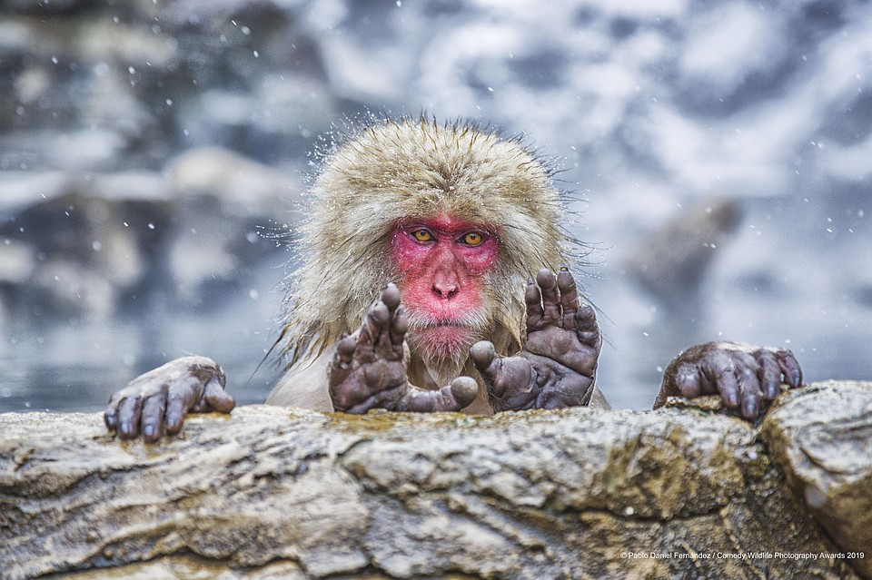Фото: Pablo Daniel Fernandez/The Comedy Wildlife Photography Awards 2019