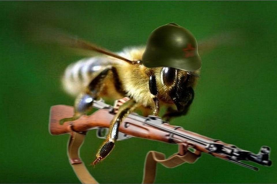 Картинки по запросу как пчелы немецких солдат покусали