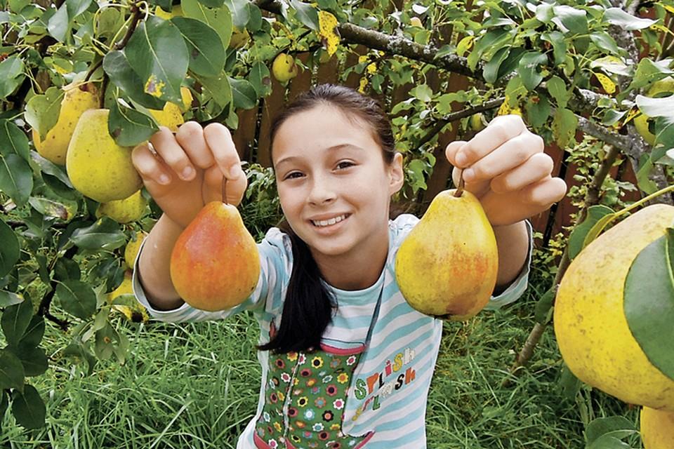 Плодовые деревья еще можно спасти, если действовать грамотно!