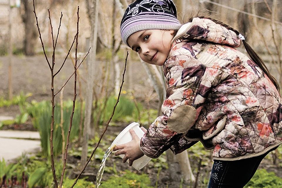 Никакой полив не поможет, если вы купили некачественные деревца. Фото: фотобанк Лори