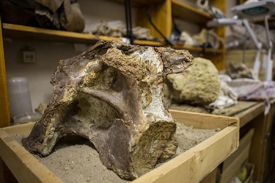Ученые из Петербурга открыли нового динозавра