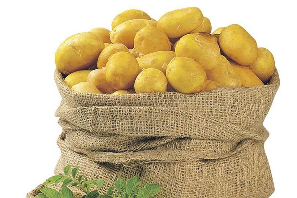 Россельхознадзор пригрозил временно ограничить импорт белорусского картофеля