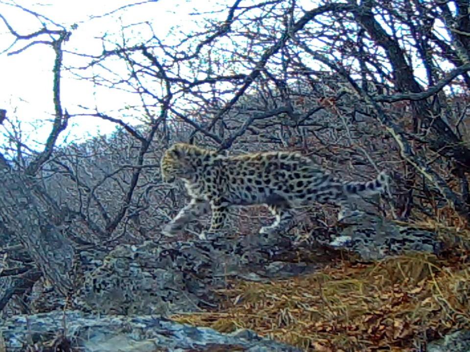 "фото - ""Земля леопарда"""