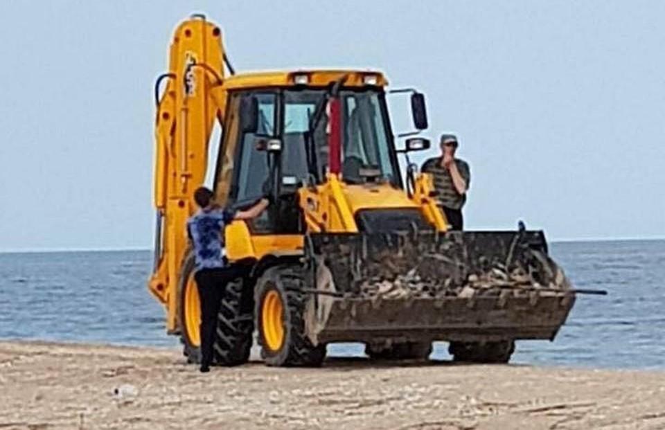 Украинские экологи не дали ответа, что стало причиной массовой гибели птиц. Фото: 0629.com.ua