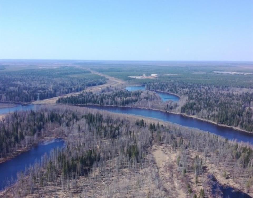 Экологи оценили ущерб нанесенный природе Сургутского района почти в 90 миллионов рублей. Фото Богдана Каширина