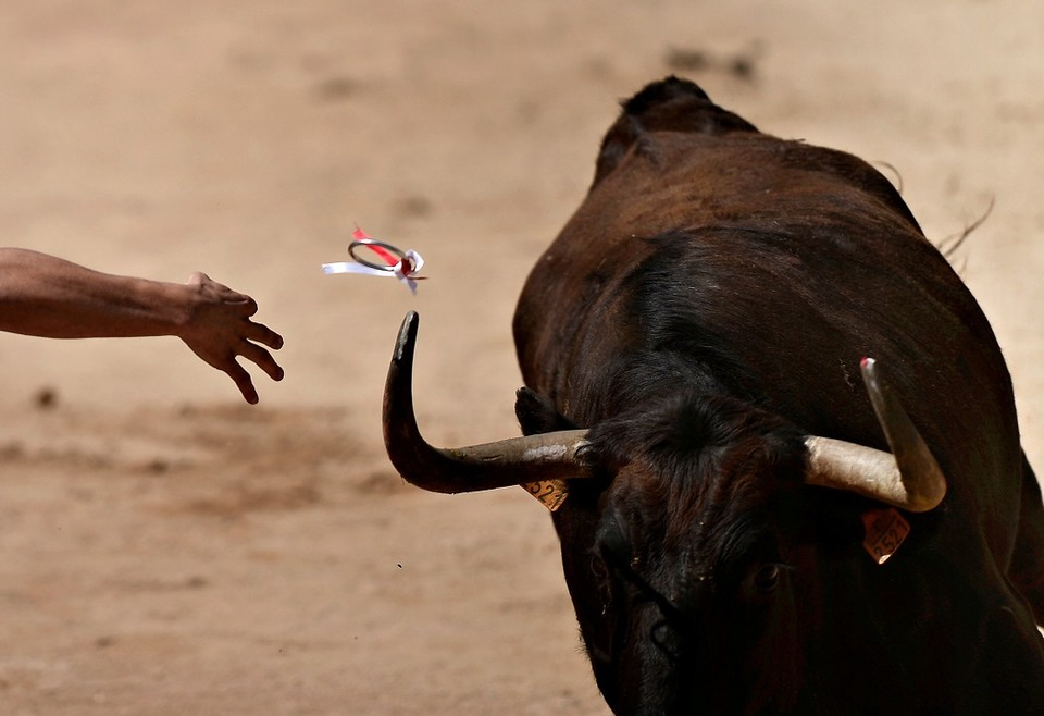 В ходе забега с быками в Испании пострадали пять человек