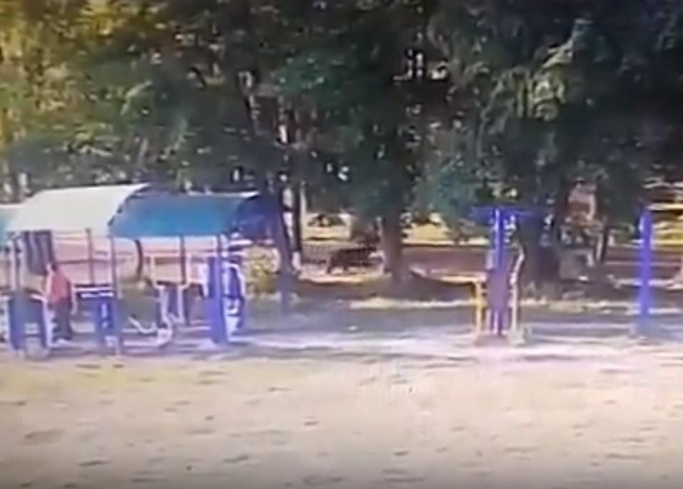 Мишка бегает по детской площадке. Фото: группа в соцсети «Весьегонск. Новости».