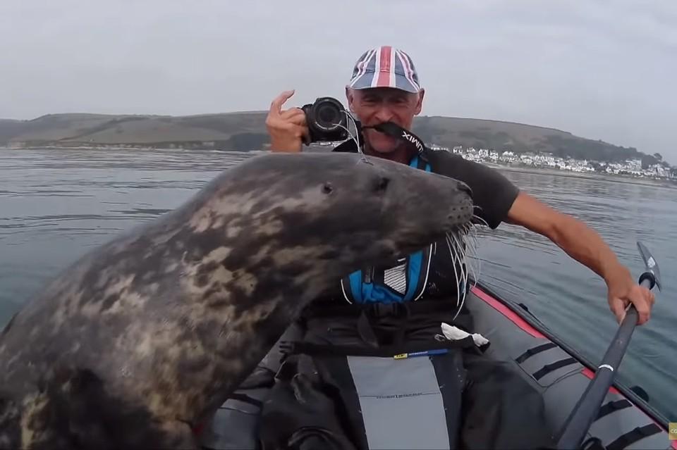 Тюлень так и норовил перевернуть неустойчивую байдарку