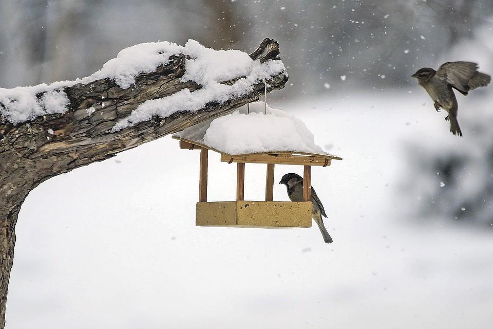 интерьере квартиры картинки кормить птиц зимой в кормушке самое