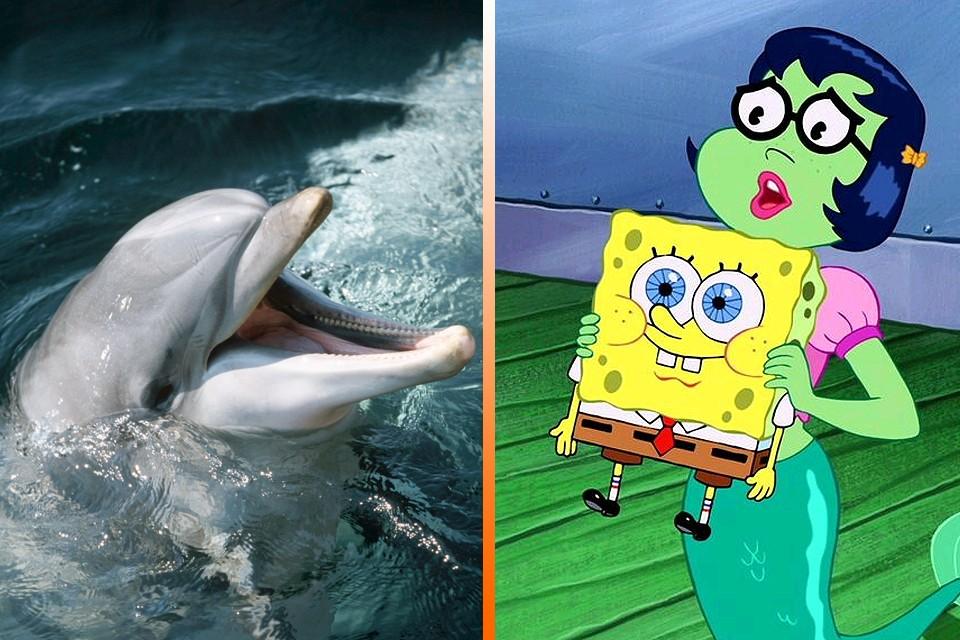"""Мультсериал """"Губка Боб Квадратные Штаны"""" полюбился дельфинам."""