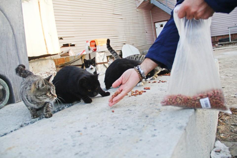 На шум пакета к месту кормёжки выбежало больше 10 котов