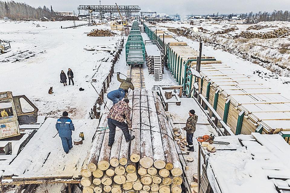 Русский лес пилят и вывозят целыми эшелонами. Конвейер работает без остановок. Новая тайга здесь вырастет только лет через 50 или даже 100...