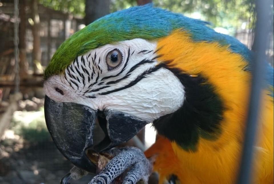 """Интернет-мошенник """"прогорел"""" на продаже попугая."""