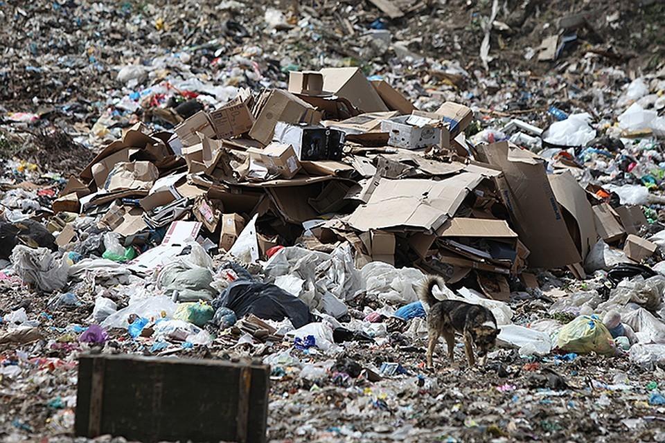 На ликвидацию мусорной проблему в 2019 году будут направлены 10 млрд рублей