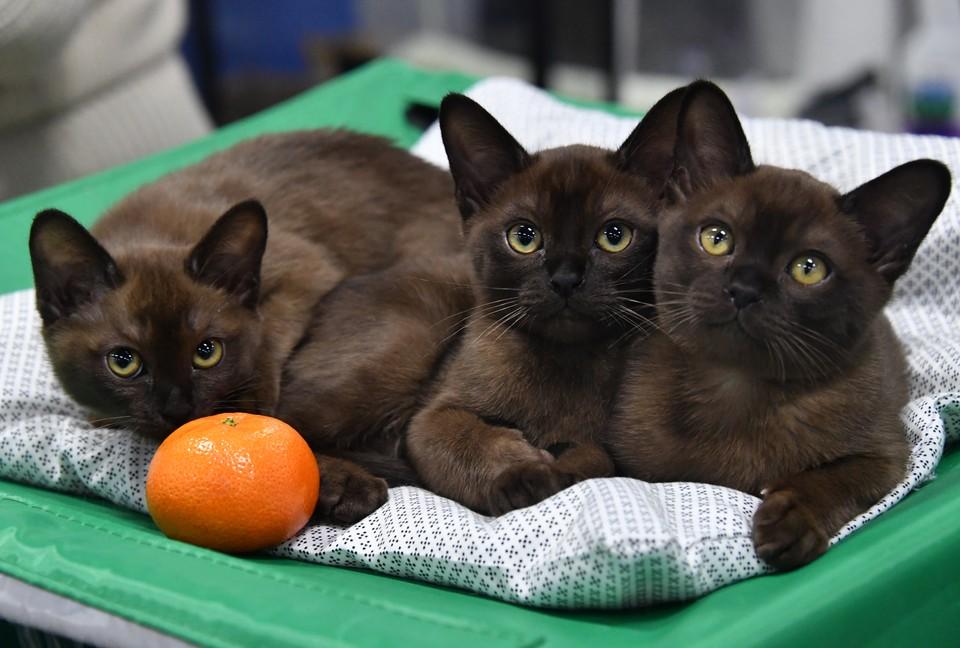 В Саратове отмечают Международный день кошек