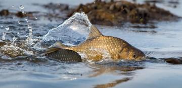 «Курс на нерест»: какие запреты на вылов рыбы действуют в Нижегородской области