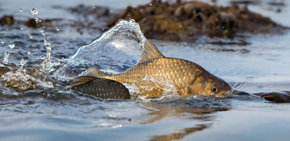 «Курс на нерест»: какие запреты на вылов рыбы действуют в Нижегородской области. Фото: СОЦСЕТИ
