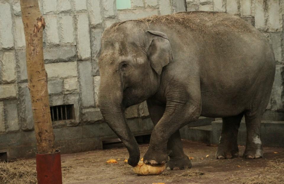 Фото: предоставлено пресс-службой Екатеринбургского зоопарка