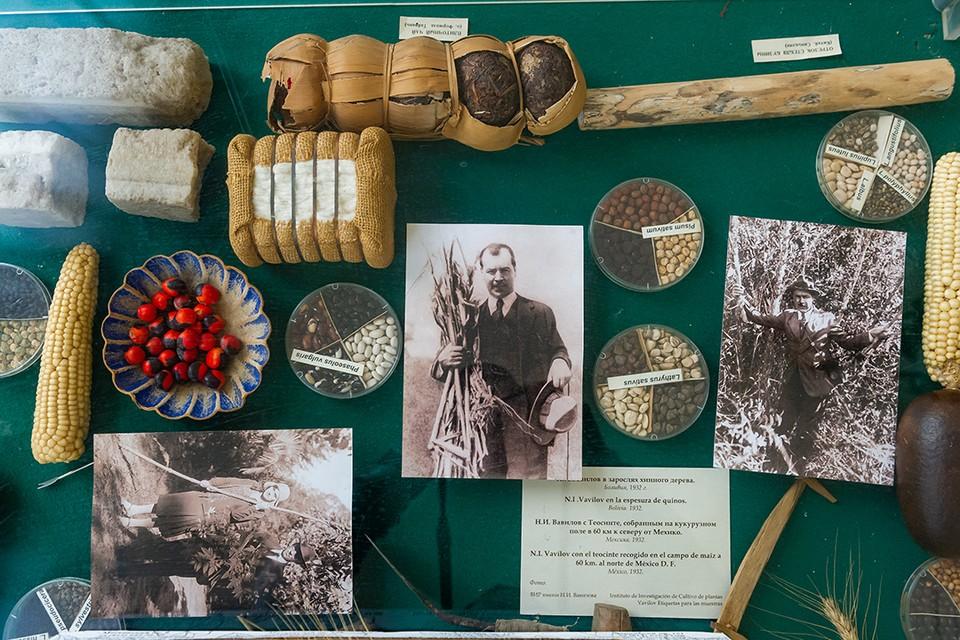 Коллекция семян Николая Вавилова всегда оценивалась в триллионы долларов.