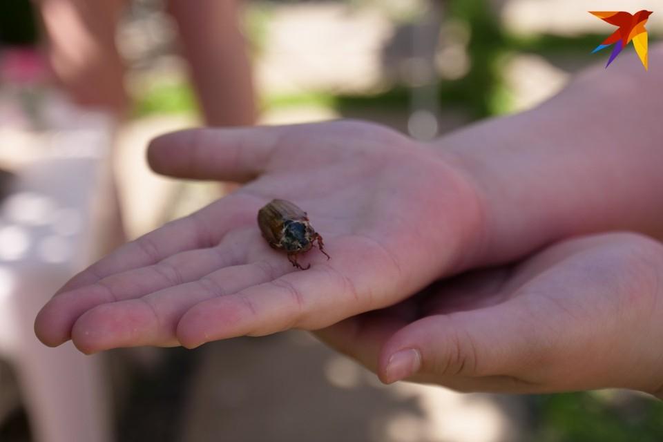 В этом году, как и 4, и 8 лет назад, мы стали очевидцами массового лёта жуков