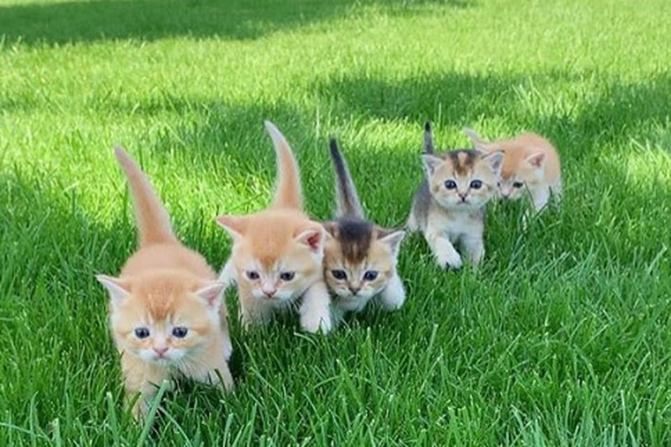 Котята вышли на свою первую прогулку в парк. Фото: instagram.com/miya_goldkitty/