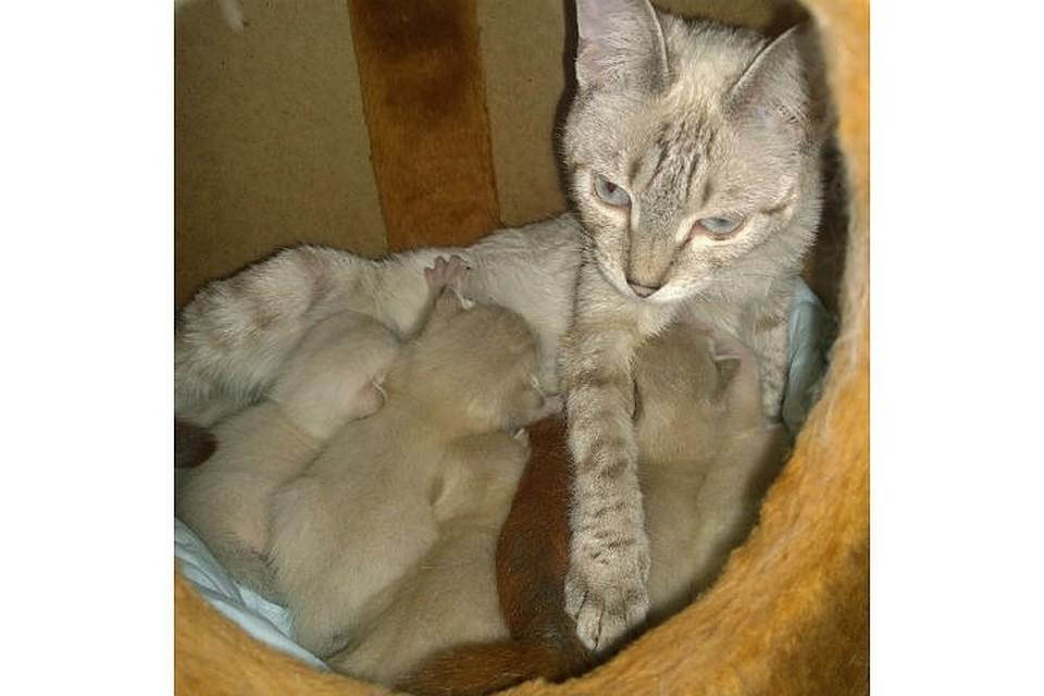 Воспитала, как родного: кошка Даша в иркутской зоогалерее исцелила раненого бельчонка. Фото: иркутская зоогалерея в соцсетях.