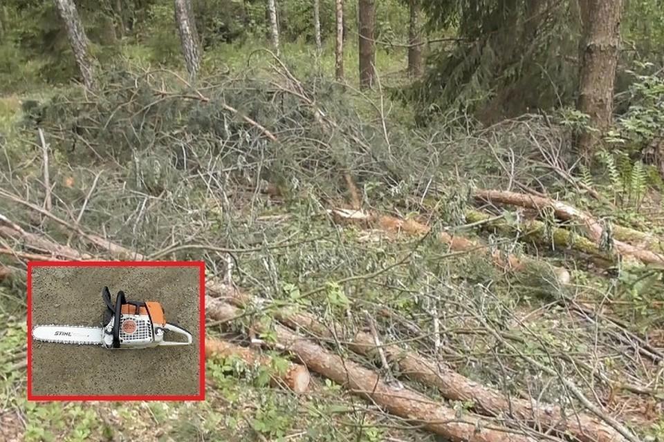 Мужчина пилил лес, а его помощники сгружали бревна в ЗИЛ. Фото: gosinspekciya.gov.by.