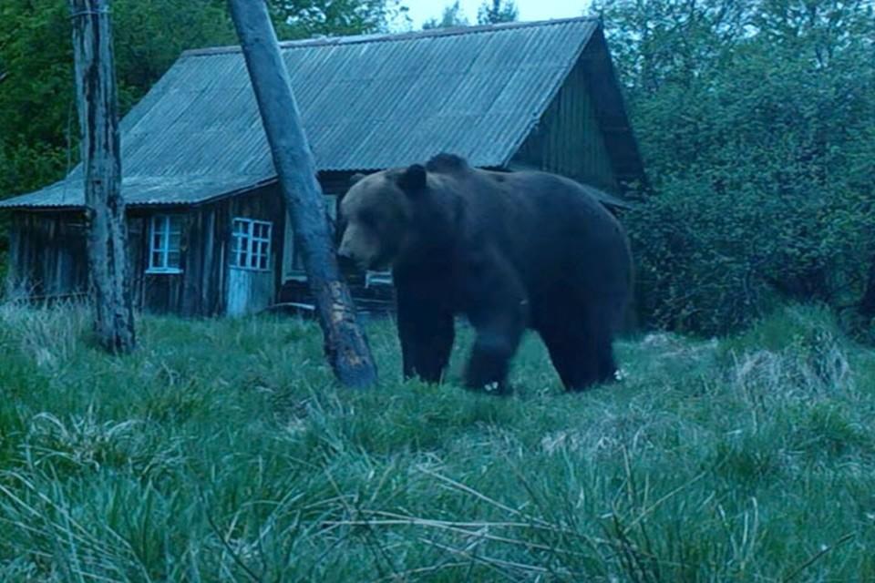 Фото: кадр видео / Naust Eco Station