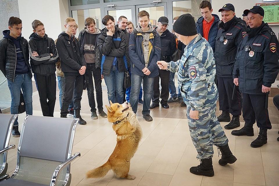 Единственный в России корги-полицейский раскрывает преступления в Нижнем Новгороде