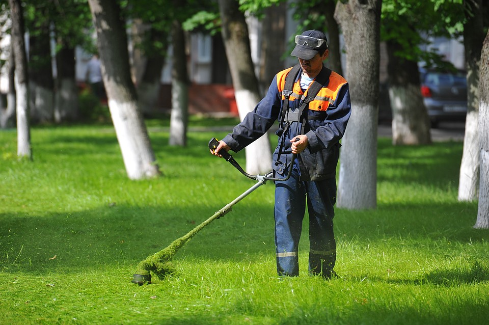 сырное картинки про газонокосильщика разные профессии, наша