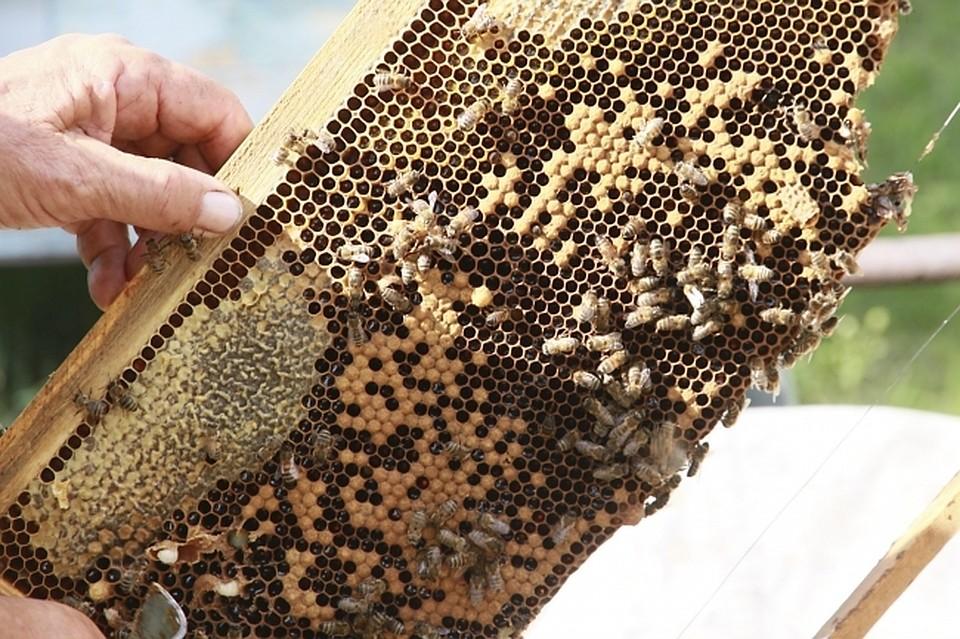 Кредит на пчеловодство россельхозбанк