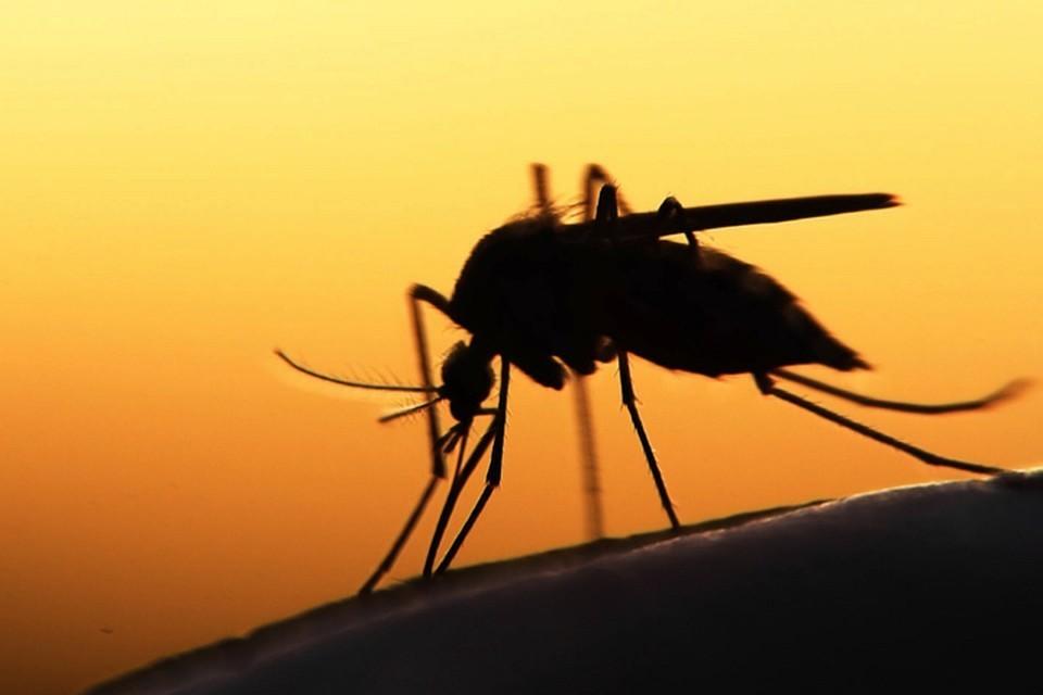 Ученые рассказали, кого чаще кусают комары