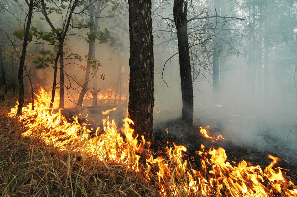 На западе Москвы загорелась трава и кустарники