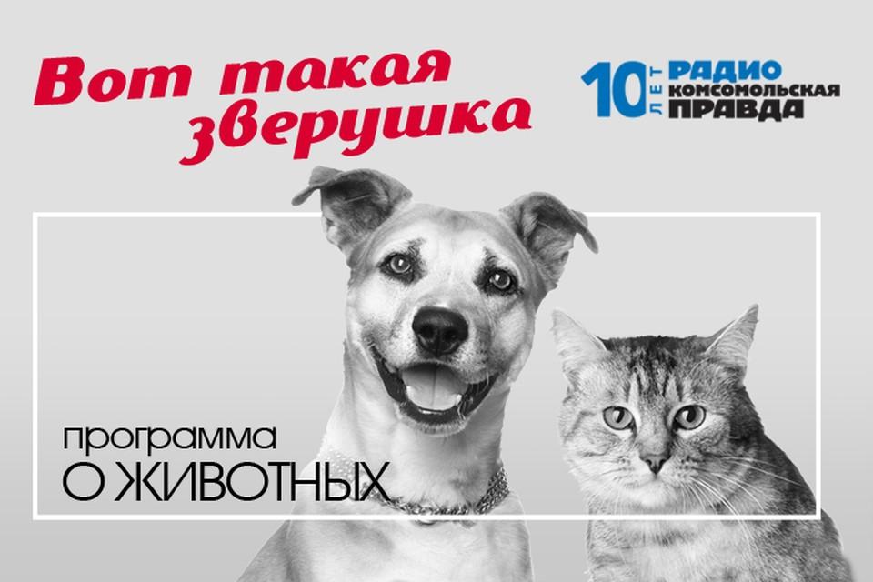 Илья Середа дает бесплатную консультацию ветеринарного врача и отвечает на вопросы слушателей