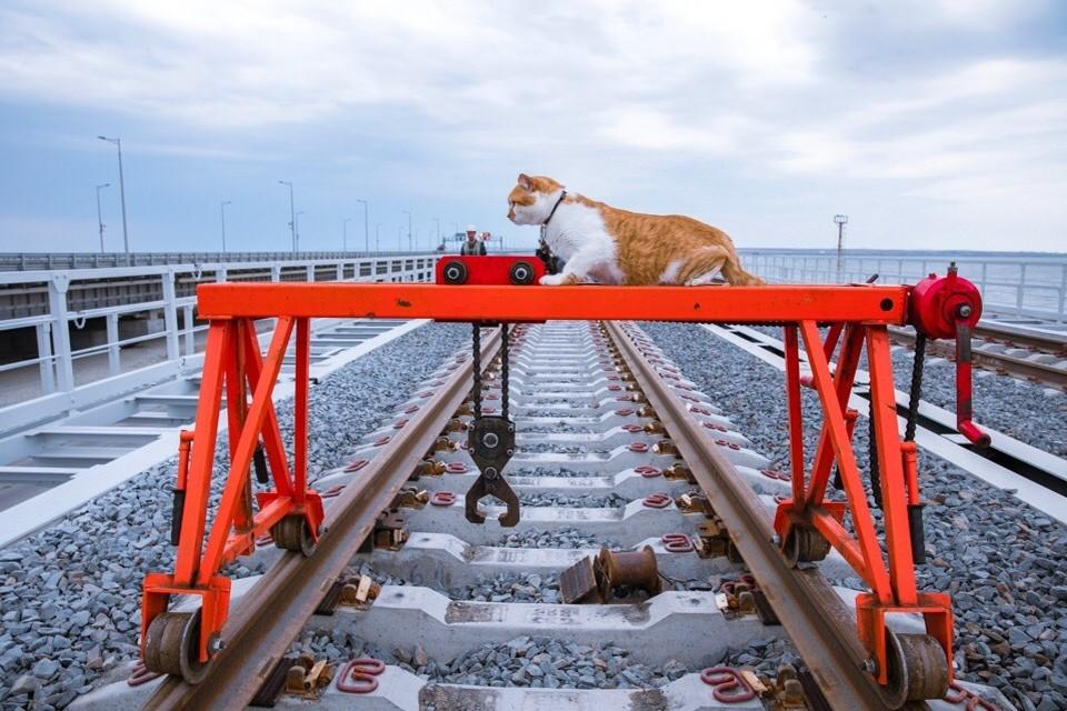 Котоинспектор вышел на линию. Фото: Кот Моста/VK