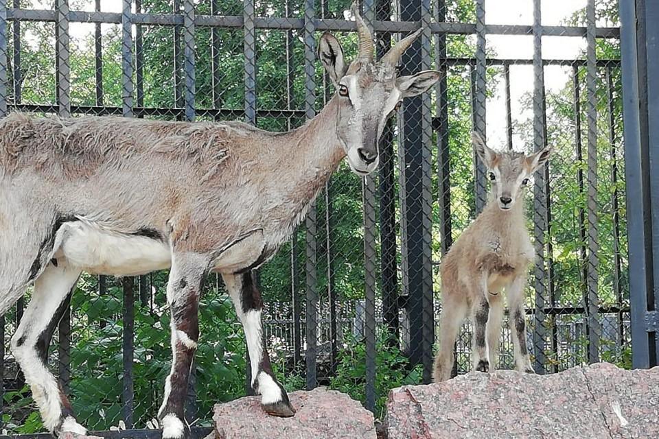 Фото пресс-службы Московского зоопарка