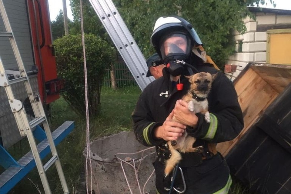 Спасатели достали щенка из 8-метрового колодца. Фото: МЧС