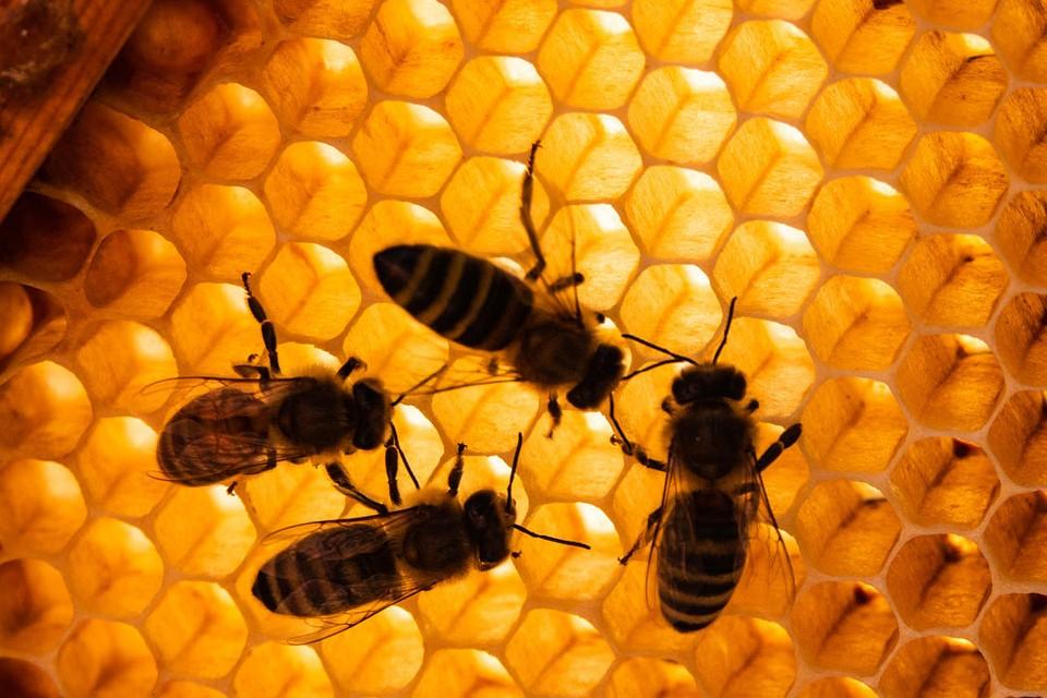 Массовая гибель пчел: причины и последствия
