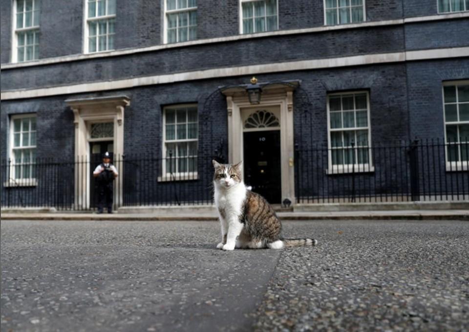 Кот Ларри - «главный мышелов в Кабинете Министров».