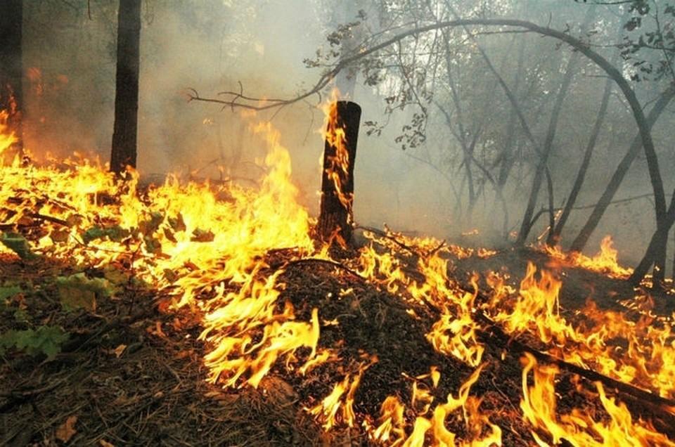Карта лесных пожаров в Иркутской области: горит около 600 тысяч гектаров тайги