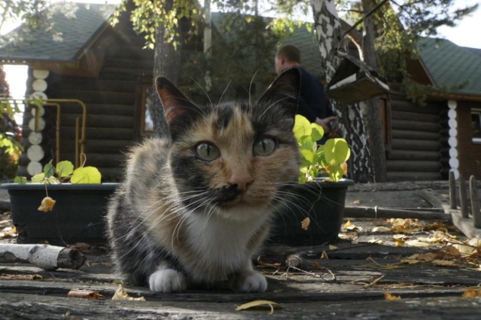 Животных подкармливают бабушки, которые живут в доме