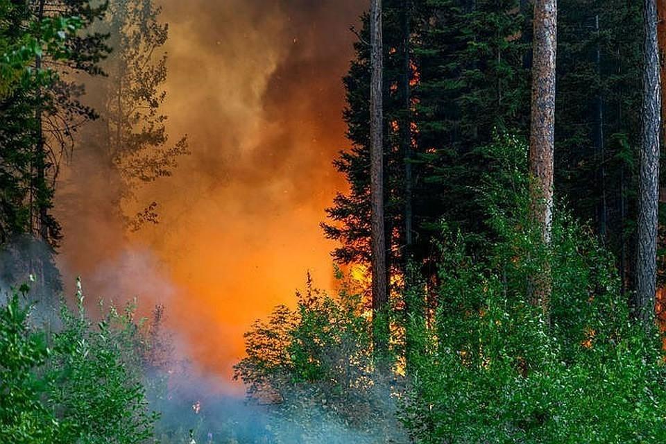 Параметры пожаров занижались. Фото: пресс-служба Авиалесоохраны