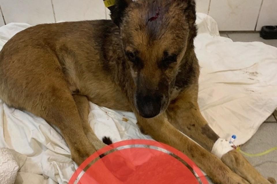 В Горловке с шестого этажа скинули собаку. Фото: ВКонтакте