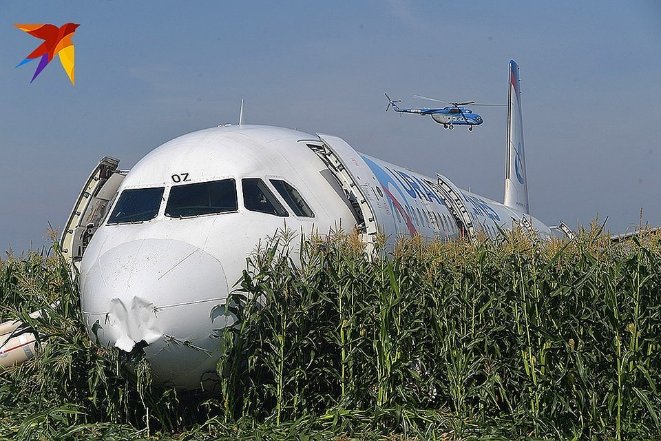 Совершивший жесткую посадку самолет А321 стал жертвой чаек, которые гнездятся на местной свалке