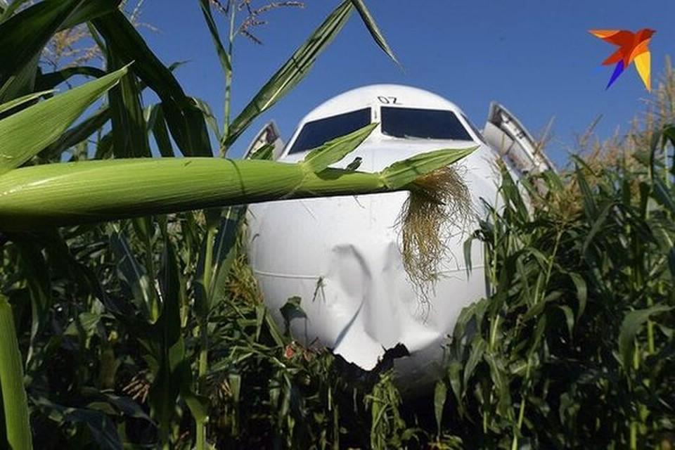 Самолет приземлился на кукурузное поле.