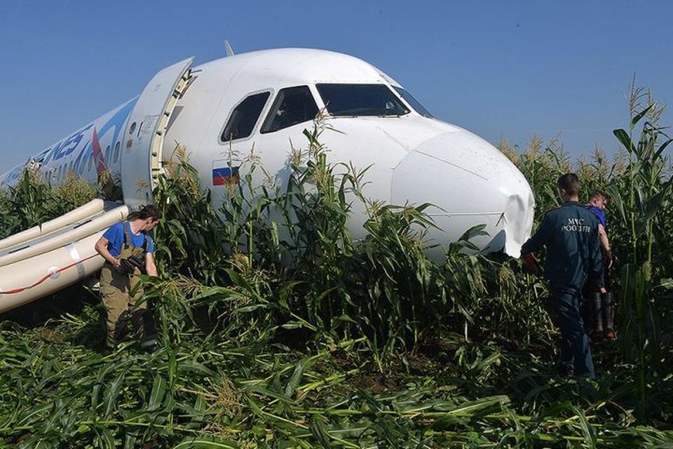 Борт А321 до сих пор стоит в кукурузном поле.